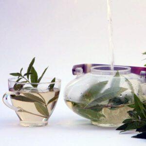 GourVeine Verveine-Tee